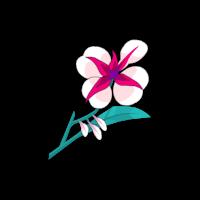 Orchidée Freyesque