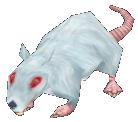 Moustache le rat