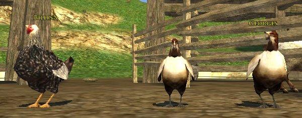 Le Chicken Play - Jeu du Poulet - migration à Fondecombes 20202